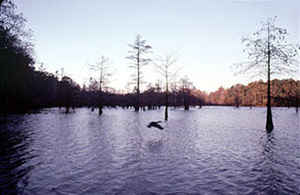 Big Hill Pond State Park
